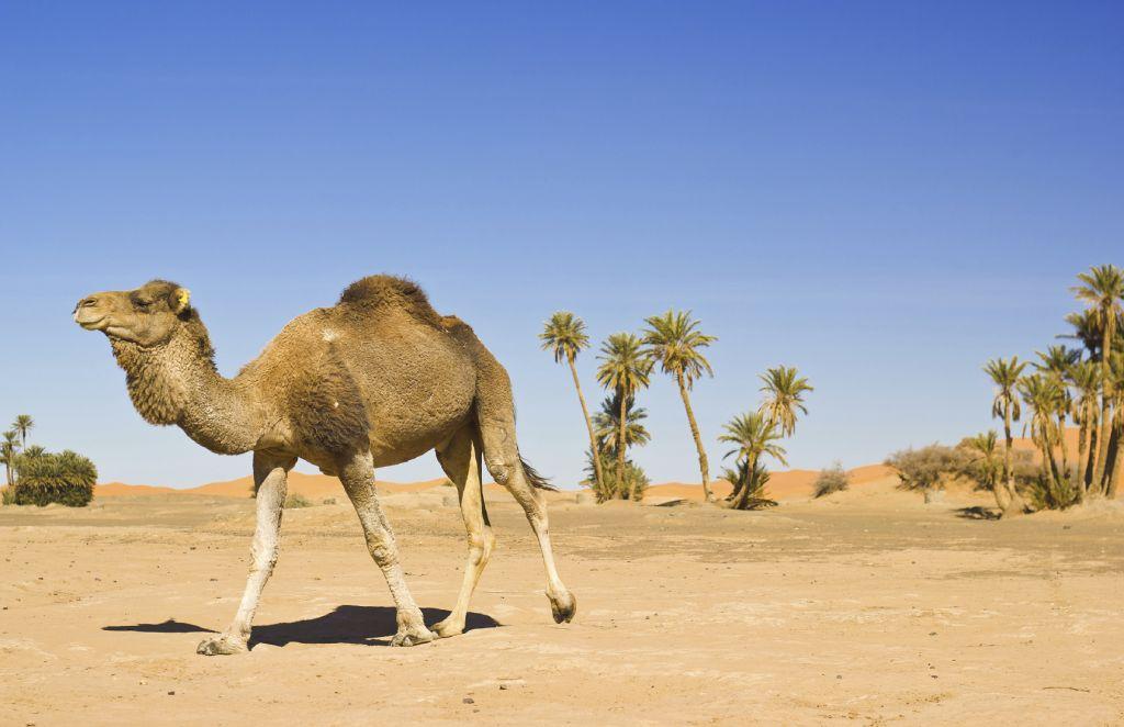 Tunisia -iStock_000032053614_Medium