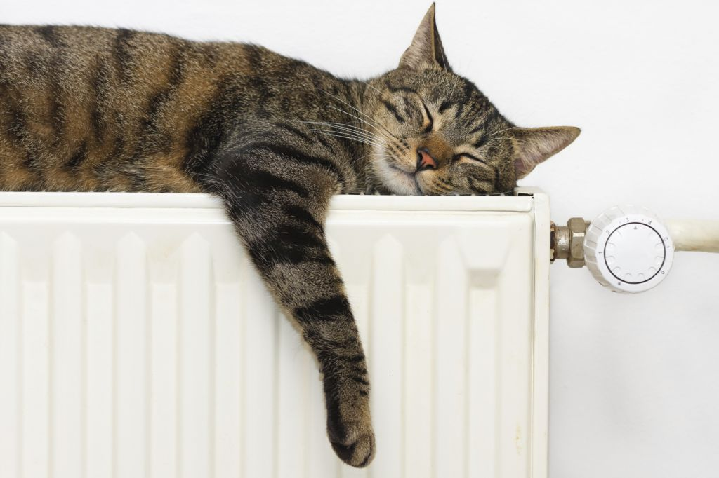 Warm Kitty - iStock_000057919784_Medium